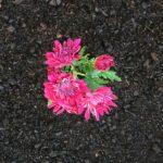 SPVS | Flowers