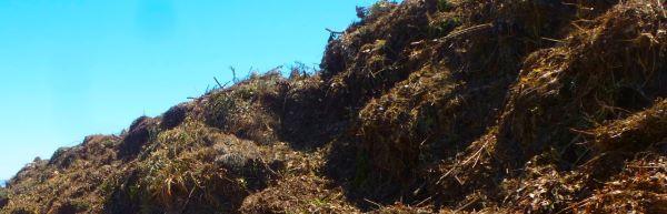 Compost Feedstock
