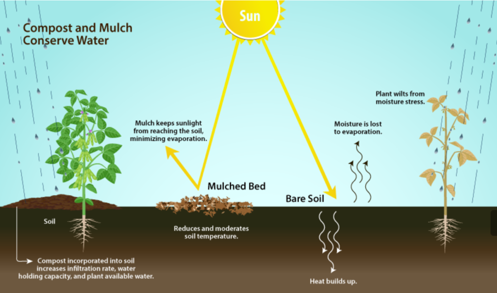 Conserve water with compost and mulch!