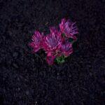 SPVS   Purple Flower