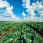 SPVS   Organic Vegetables