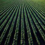 SPVS   Organic Crops