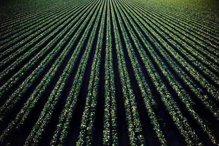 SPVS | Organic Crops