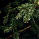 SPVS Christmas Tree Recycling