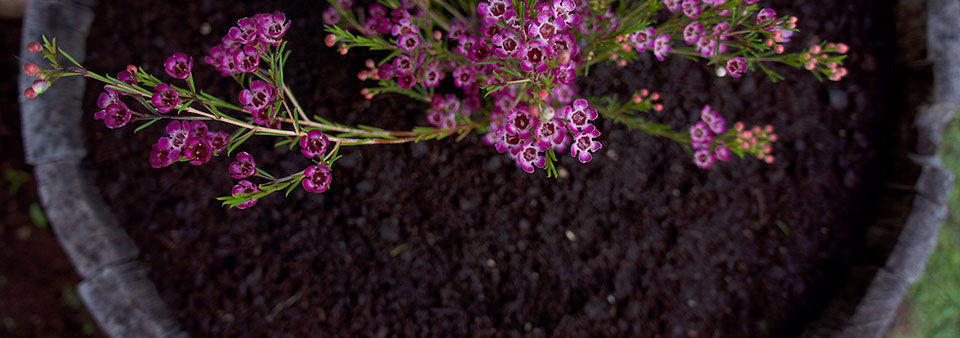 SPVS | Healthy Soil