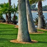 SPVS   Palm Trees