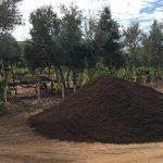 SPVS Compost Pile