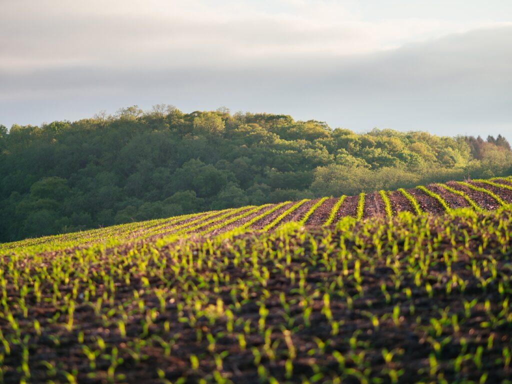 SPVS | Healthy Crops