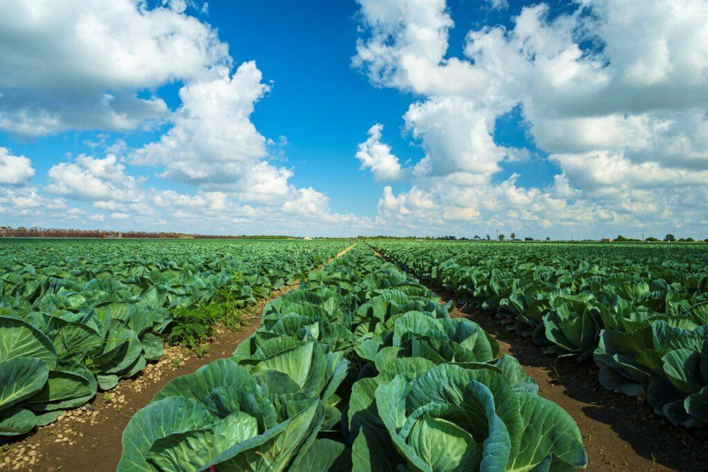 SPVS | Organic Vegetables