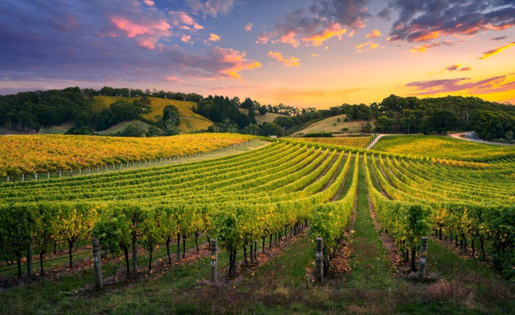 SPVS   Vineyard