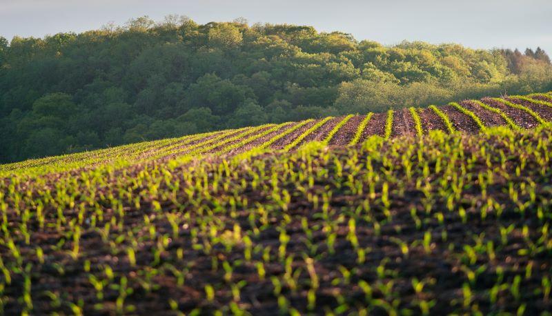 SPVS   Agriculture