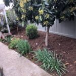 SPVS Avocado Tree Monkey Hair Mulch