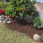 SPVS Monkey Hair Citrus Mulch Application