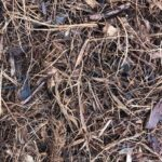 SPVS Monkey Hair Mulch