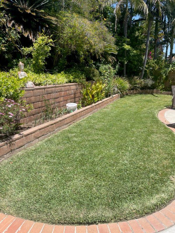 Dr Kilb's lawn 2 months after SPVS Valley's Best Compost® application.