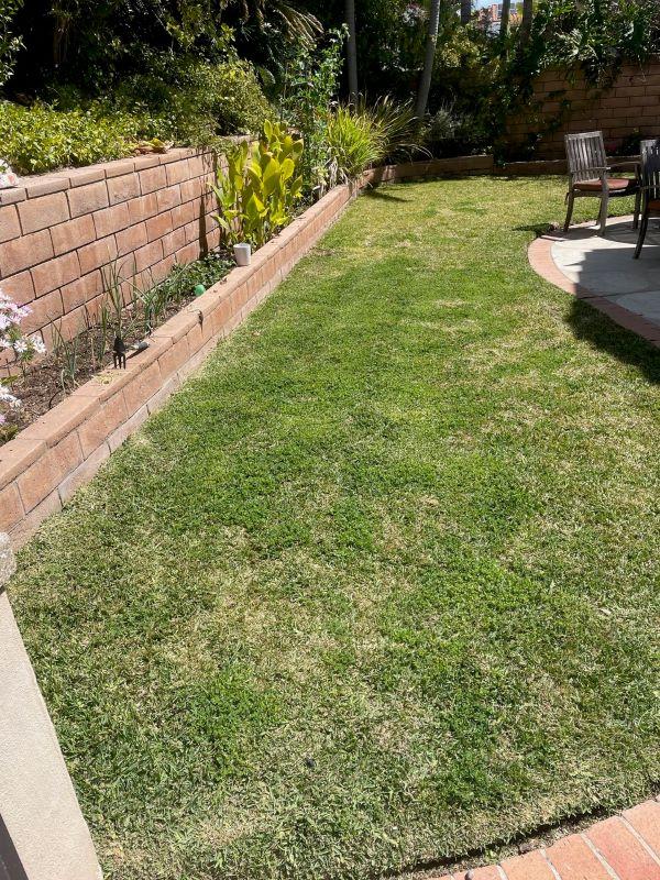 Dr Kilb's Lawn before SPVS Valley's Best Compost® application.