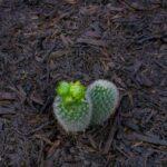 SPVS-Growers-Mulch
