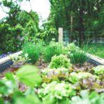 SPVS | Raised Bed Garden