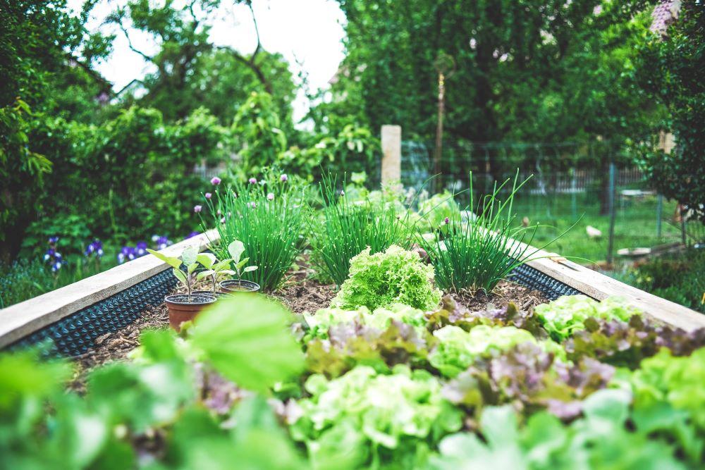 Creating a Super Garden with SPV Soils Raised Garden Bed Mix