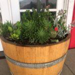 Alchemy Cactus & Succulent Display | SPVS