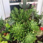Alchemy Cactus & Succulent Display 2 | SPVS