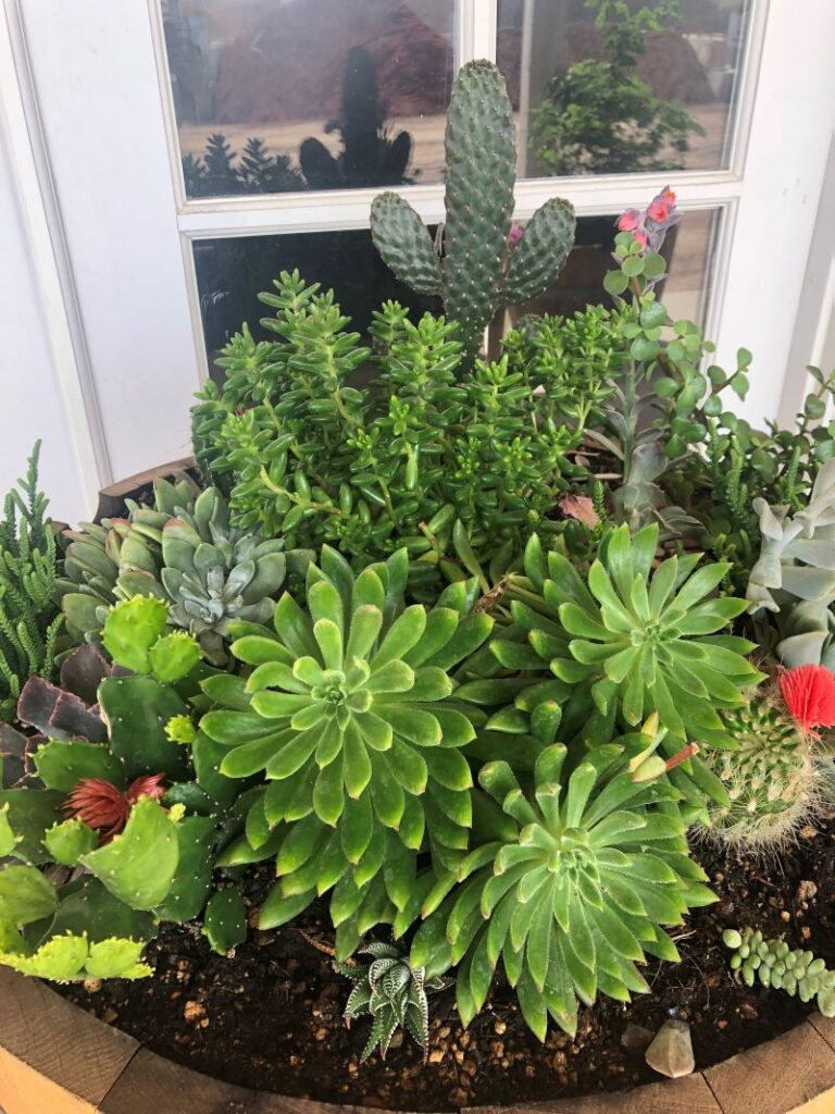 Alchemy Cactus & Succulent Display 2| SPVS