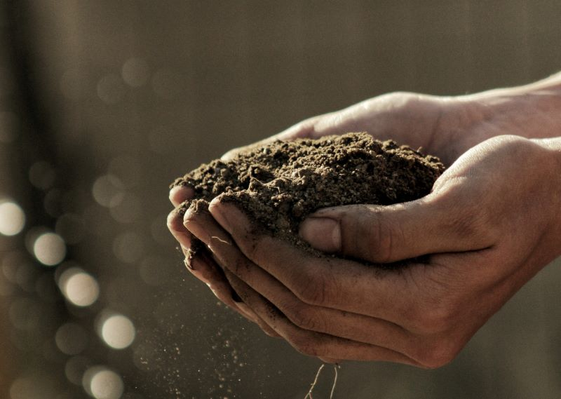 SPVS | What is in your Soil?