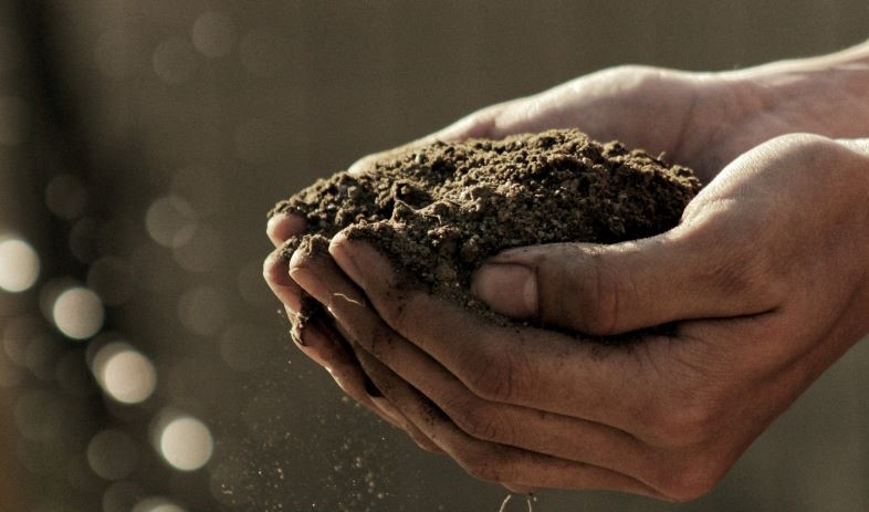 How Organic Compost Affects Soil