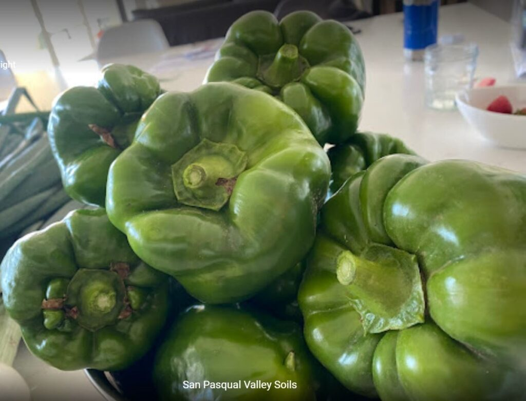 Bell Peppers grown with SPVSoil