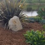 SPVS | Mulched Plants