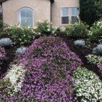 Planter's Blend Groundcover | SPVS