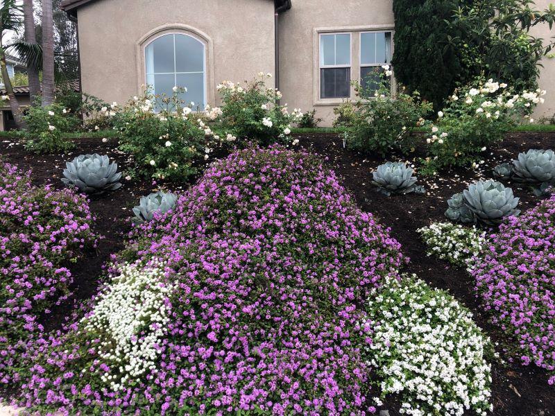 Planter's Blend Groundcover   SPVS