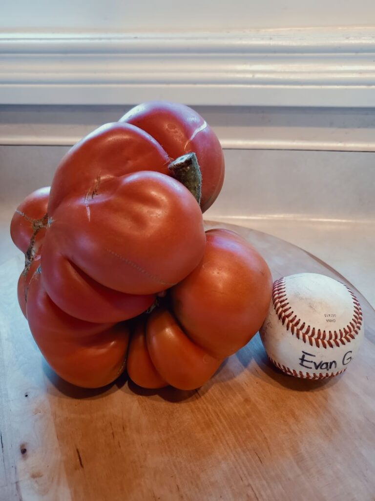 Tomato Grown w SPVS Valleys Best Compost